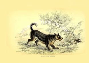 GERMAN HUNTING DOG